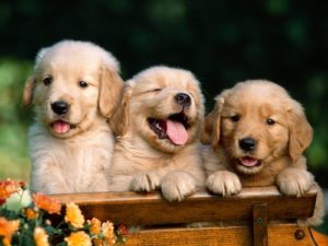 Puppies Doing Cute Things North